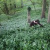 My friend and web support manager Jack, gathering wild garlic near his cottage in the Cotswolds. May 10 2009.