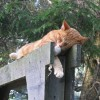 This ginger cat was clearly enjoying the summer day on the Toronto Islands. July 18 2006.